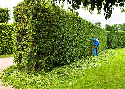 Arboriculture and Forestry Services Southampton
